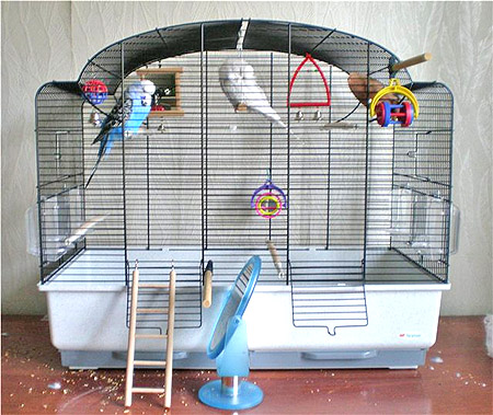Клетка для волнистых попугаев в домашних условиях 9фото)