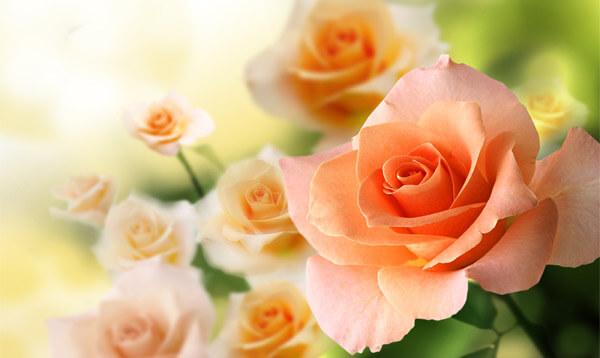 Видеть желтые розы во сне